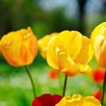 Flowers (13 of 22)