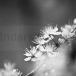 Flowers (14 of 22)