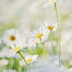 Flowers (17 of 22)