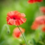 Flowers (20 of 22)