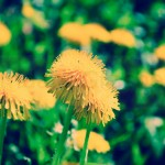 Flowers (7 of 22)