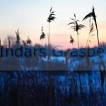 Landscapes_35