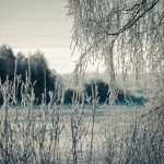 Landscapes_38