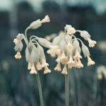 flowers-35